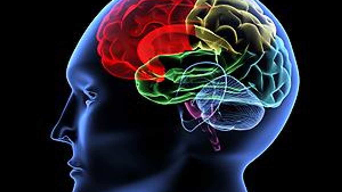 Вчені: Мозок досяг ліміту розвитку, людина розумнішою не стане