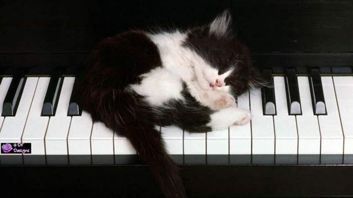 Фотографії кошенят допомагають краще працювати
