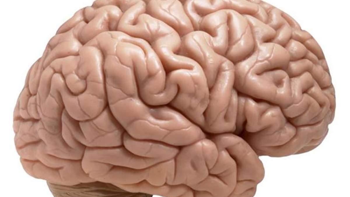 У женщин мозг меньше, но они используют его более эффективно