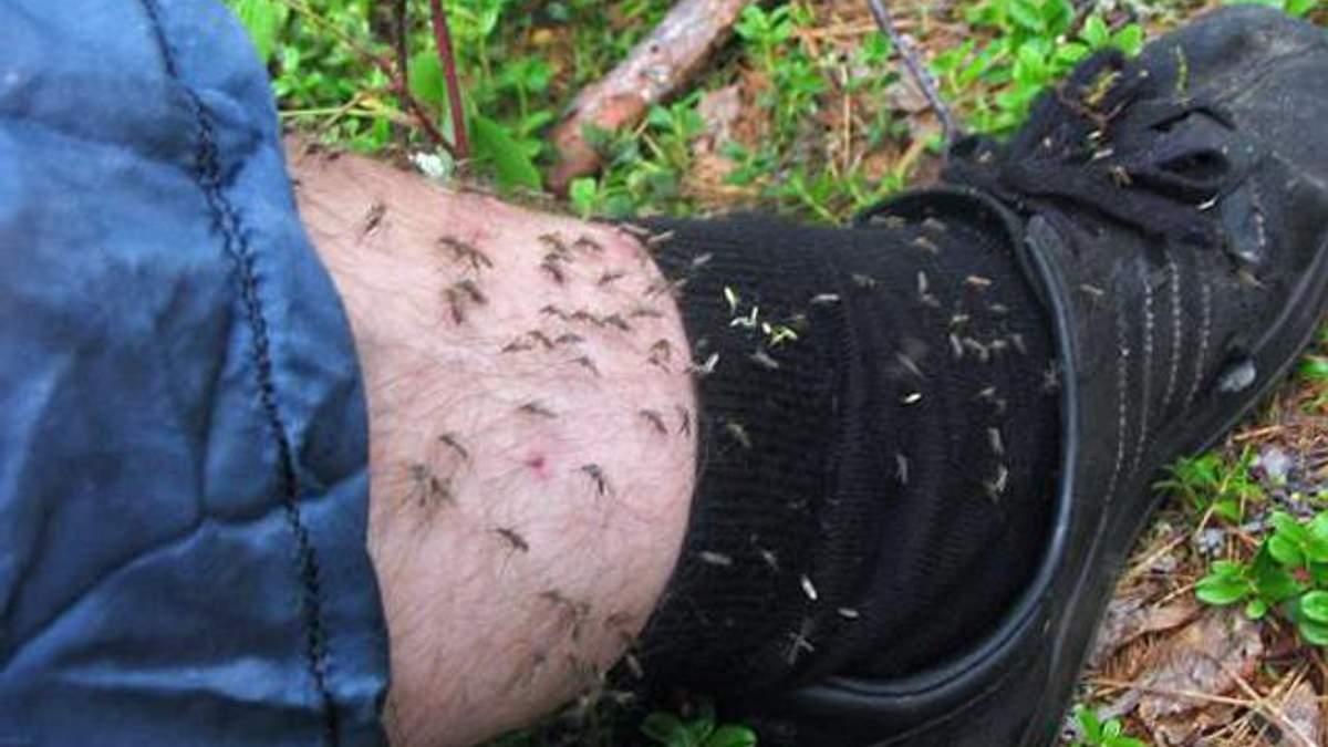 Ароматична олія гвоздики врятує від комарів на пікніку