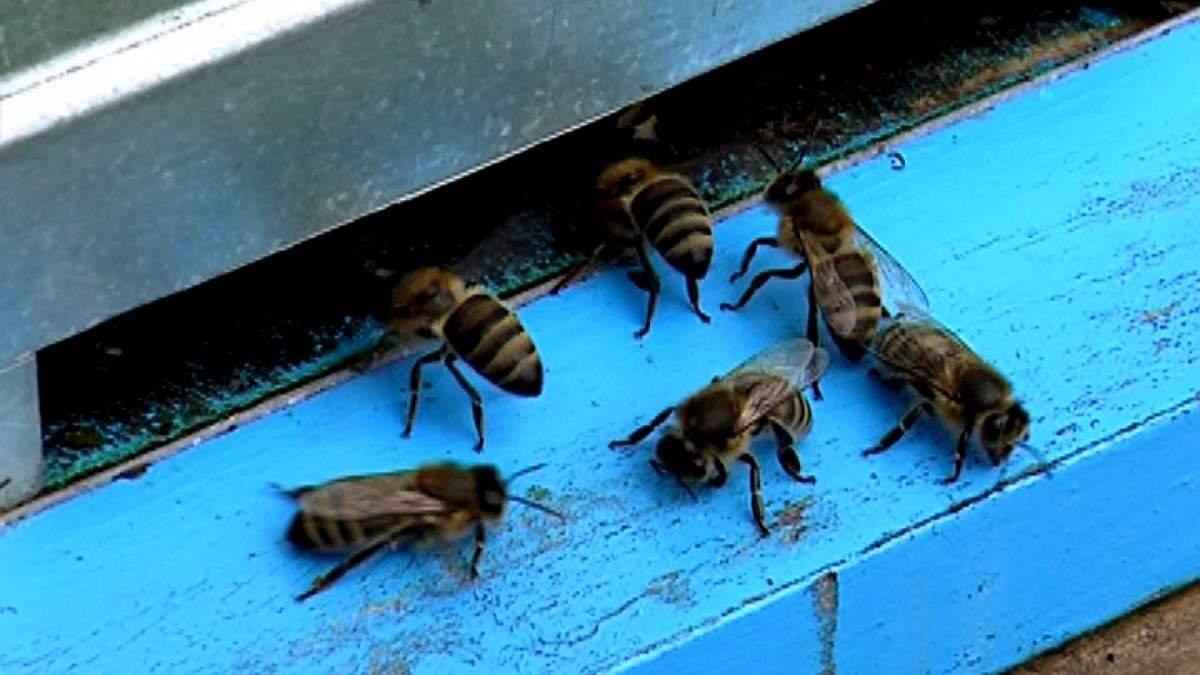 Врачей бойцам АТО заменили пчелы