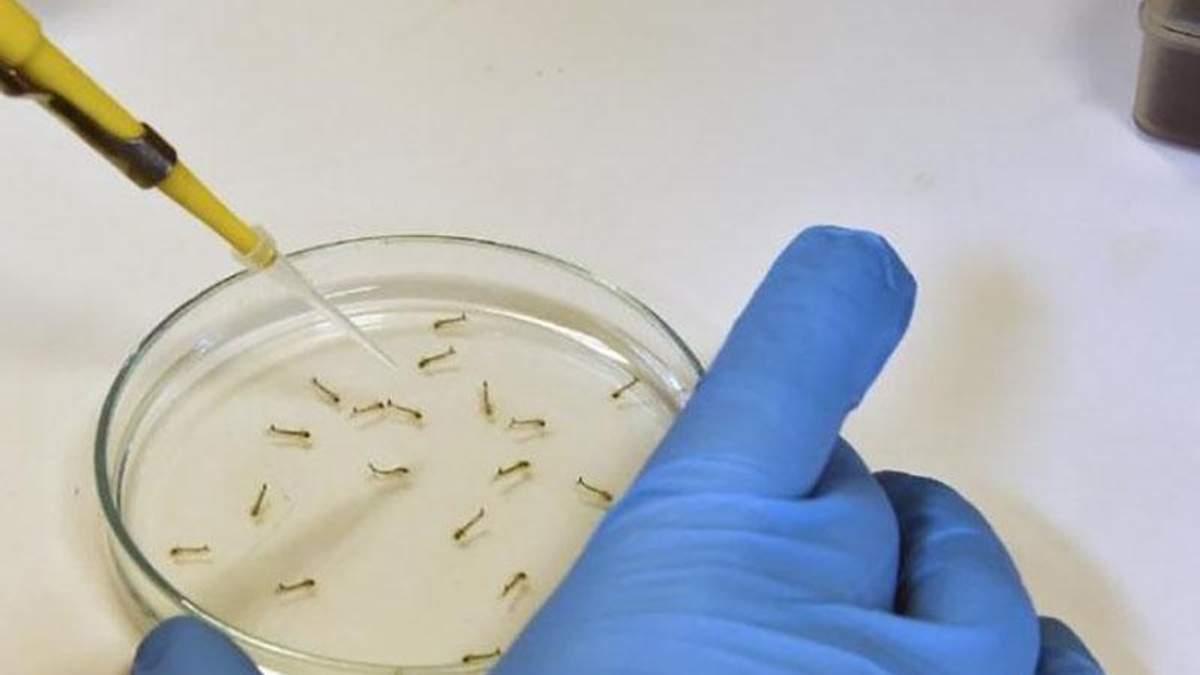 Более 50 видов насекомых, которые переносят вирус Зика, водятся в Украине