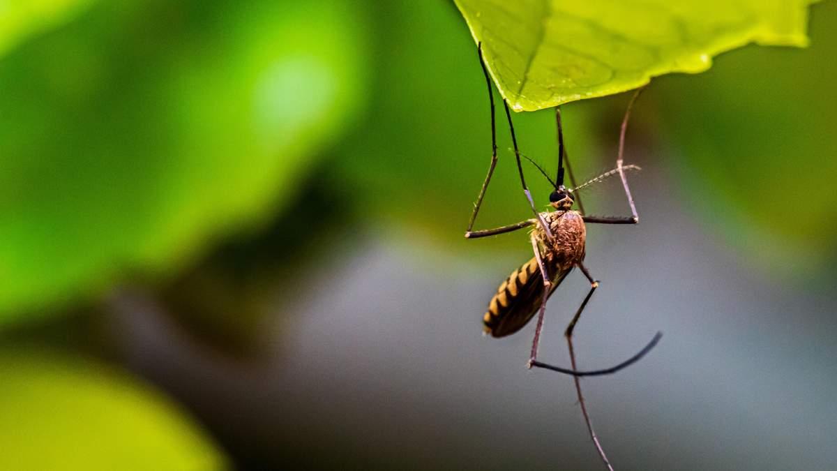 Укуси комарів: як вберегтися та що робити коли вкусив комар