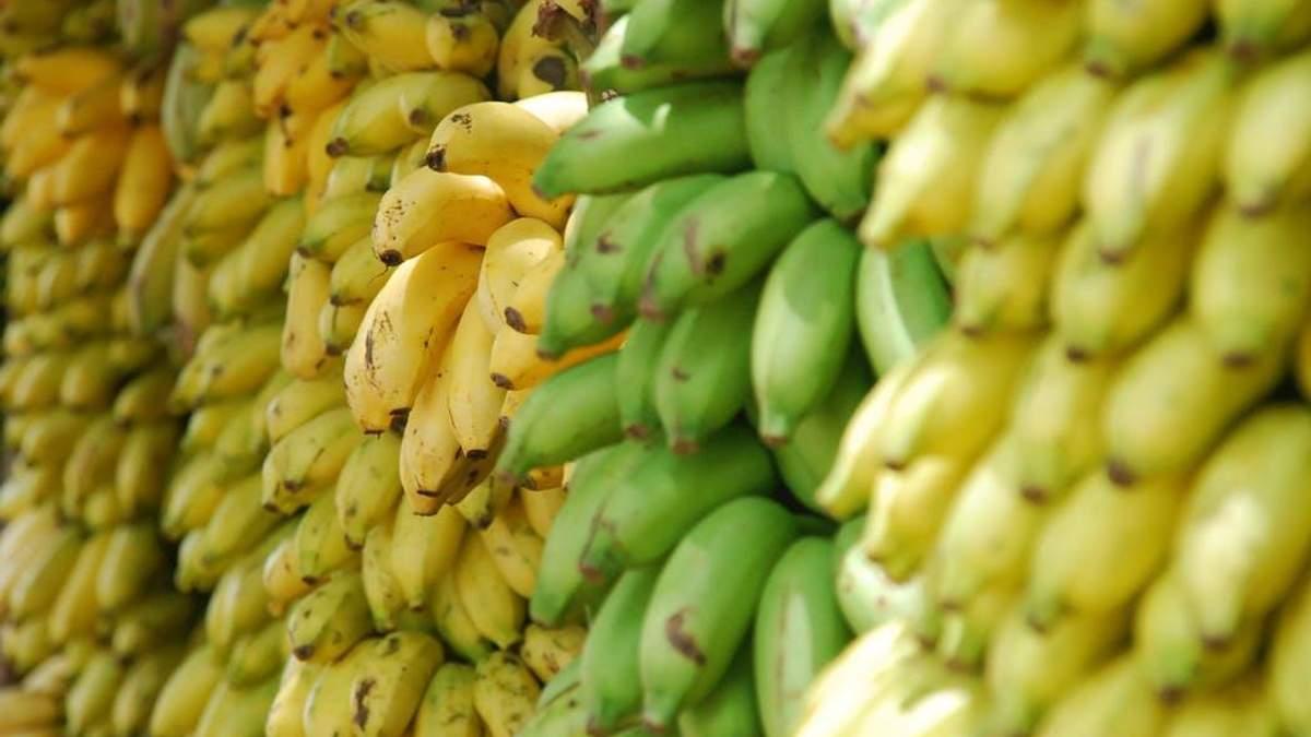 Вчені виростили банани, які зможуть рятувати життя