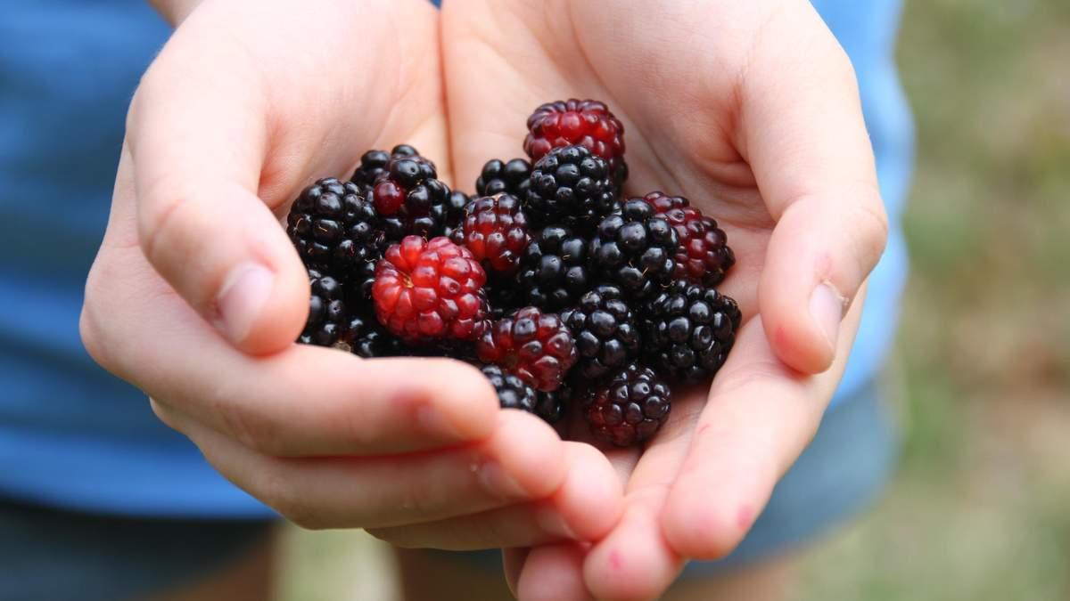 Ежевика – польза и вред ягод ежевики для здоровья