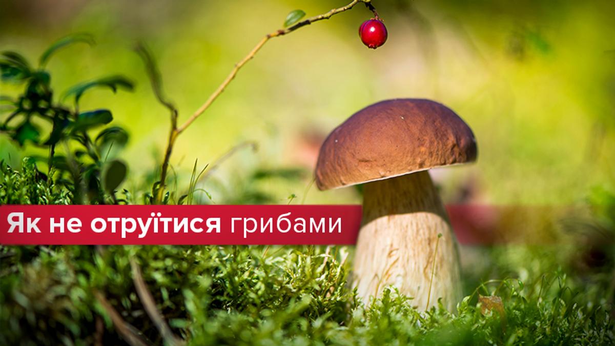Отравления грибами: симптомы и что делать - как выбирать грибы
