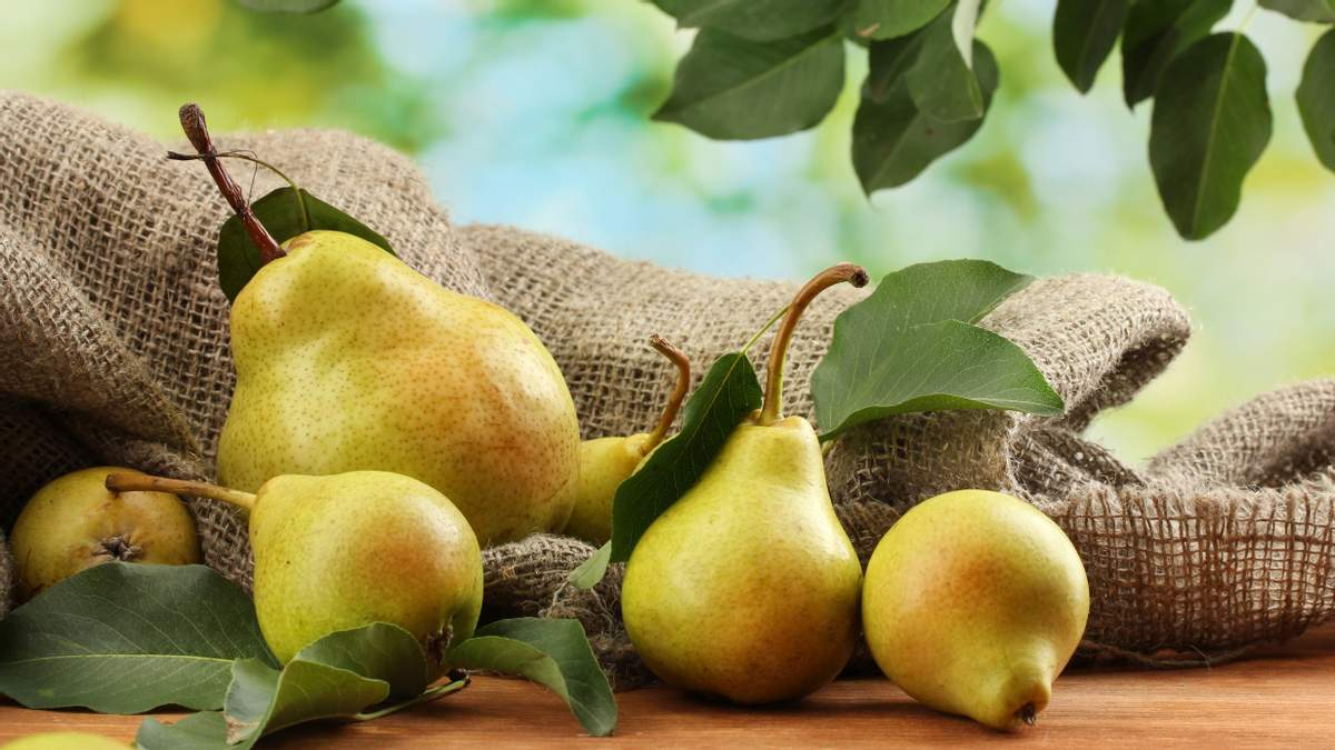 5 фактів, чому варто їсти груші щодня