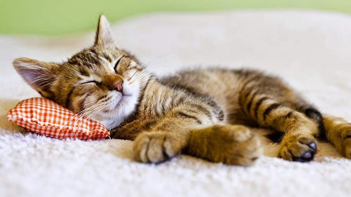 Скільки потрібно спати, щоб виспатись: відповідь вчених
