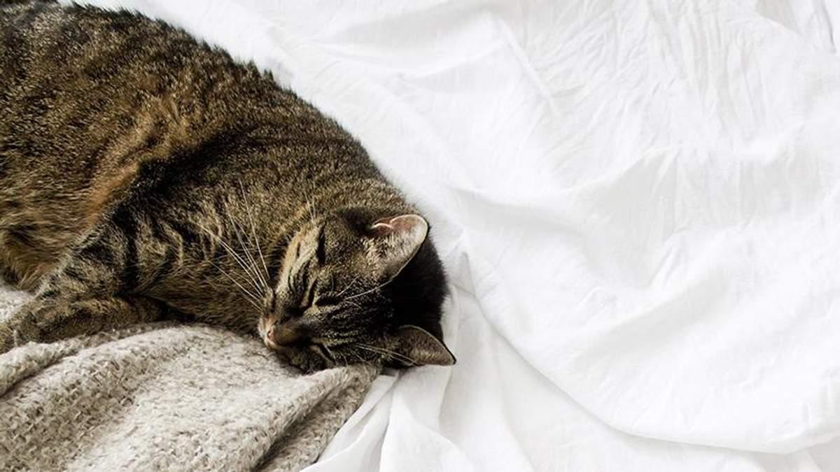 Почему дневной сон вреден: объяснение эксперта