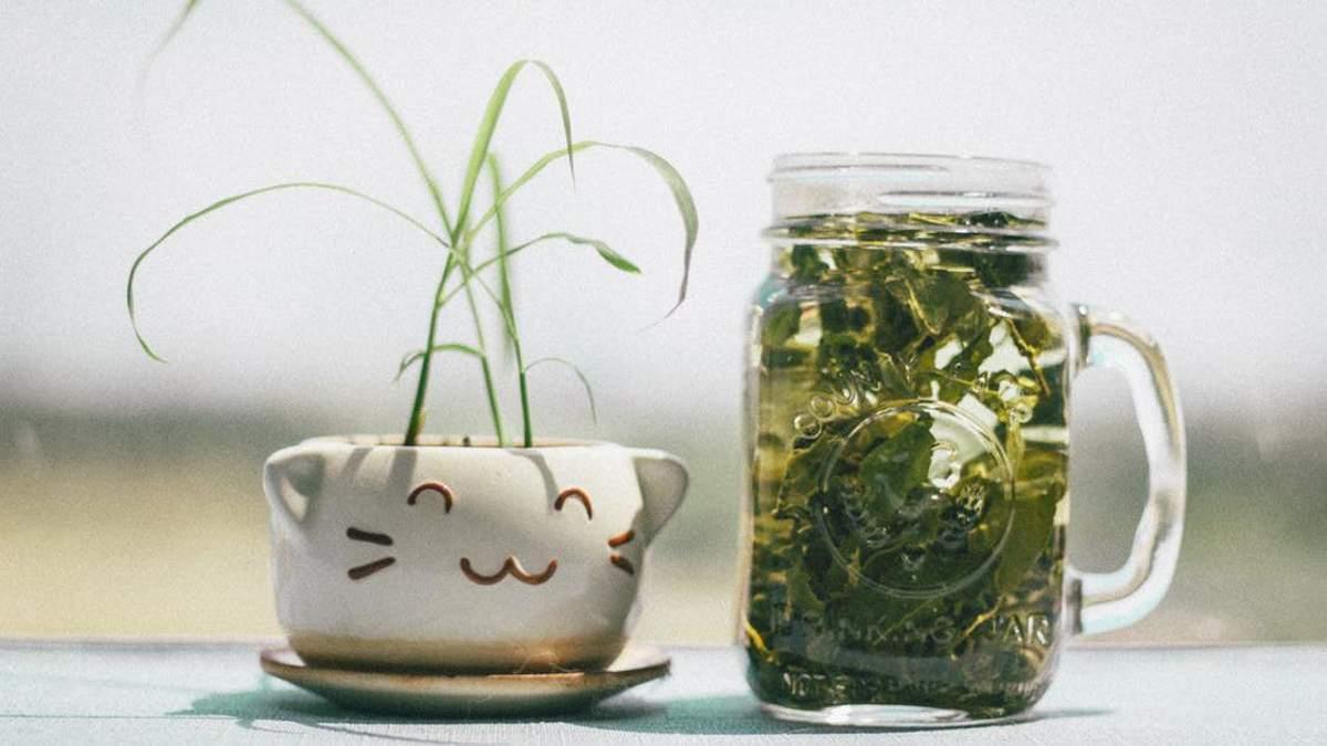 Зелений чай і сухофрукти: влаштовуємо детоксикацію організму на вихідних