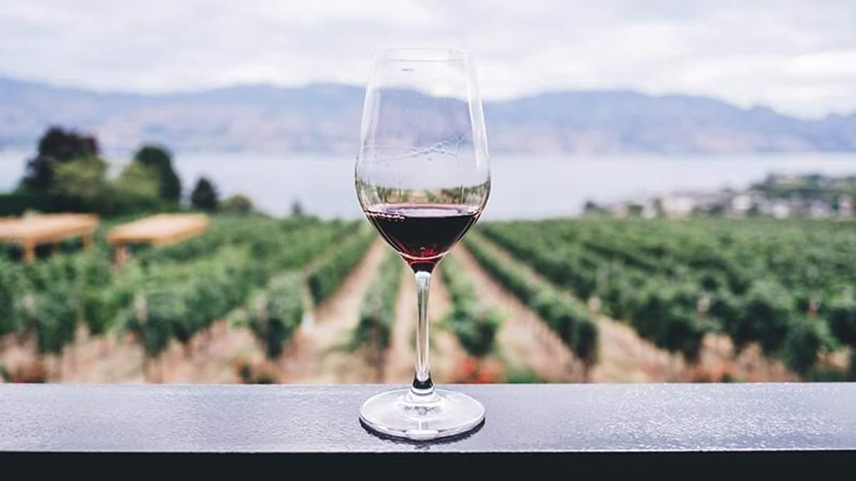 Як вживання вина впливає на зуби та ясна: висновок вчених