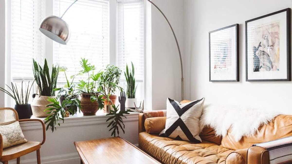 4 комнатных растения, которые лучше всего очищают душный воздух летом