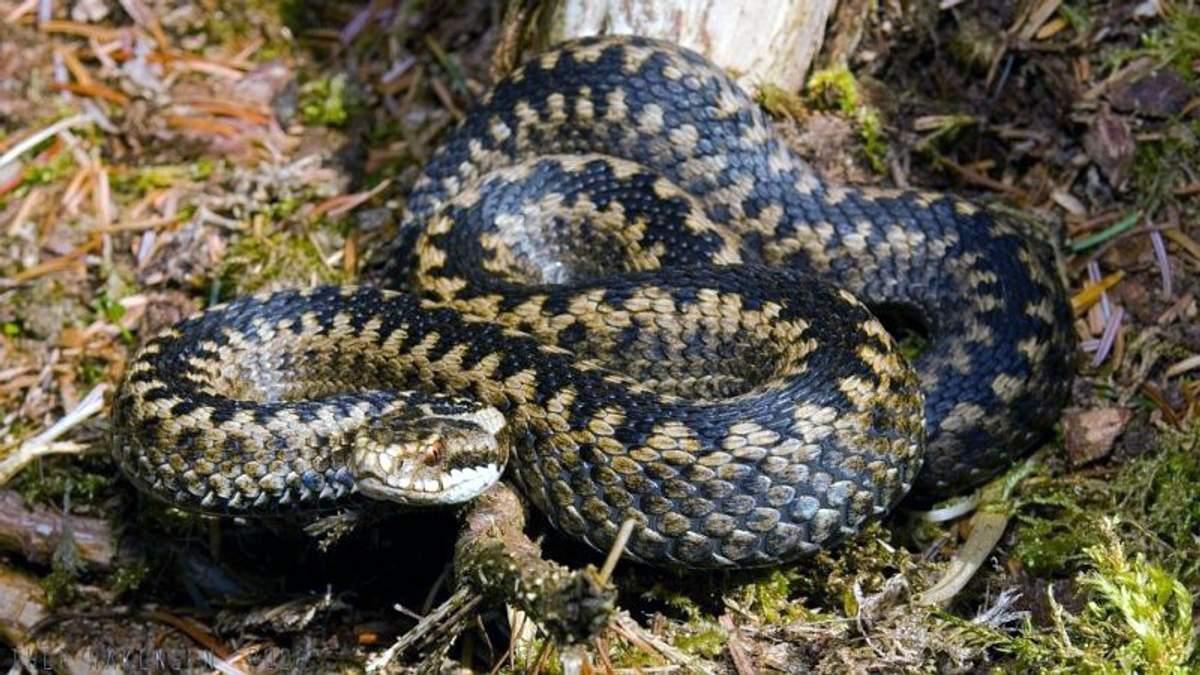 Як уникнути укусів змій