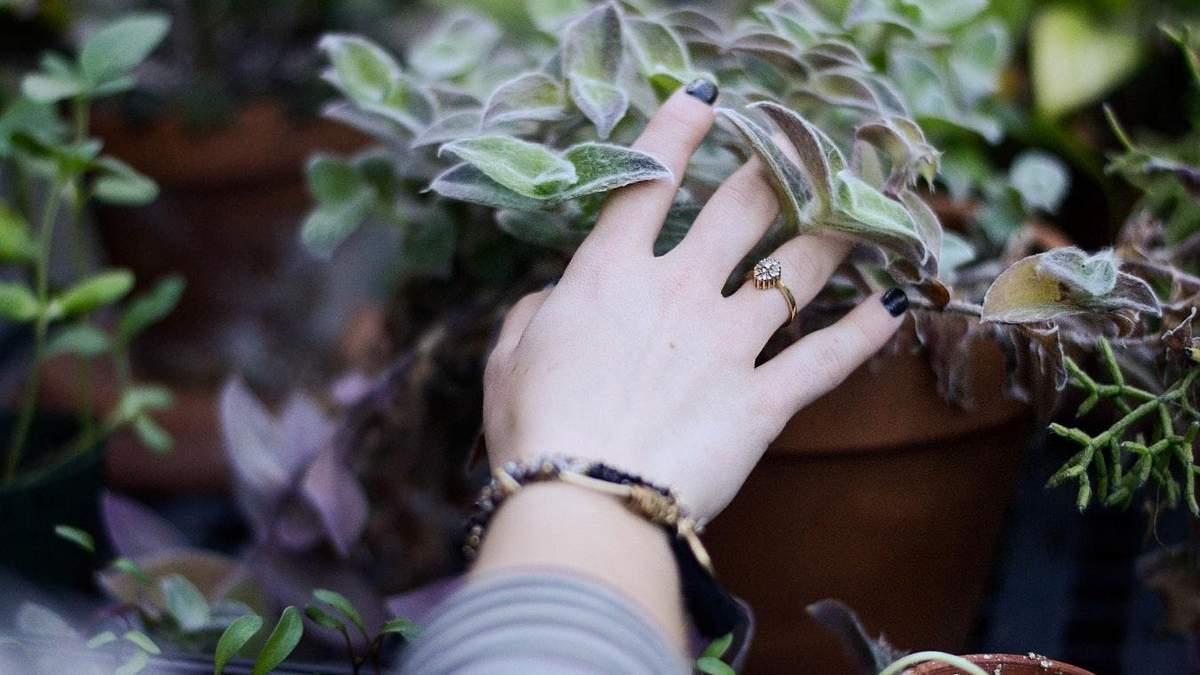 Три комнатных растения, которые очистят воздух