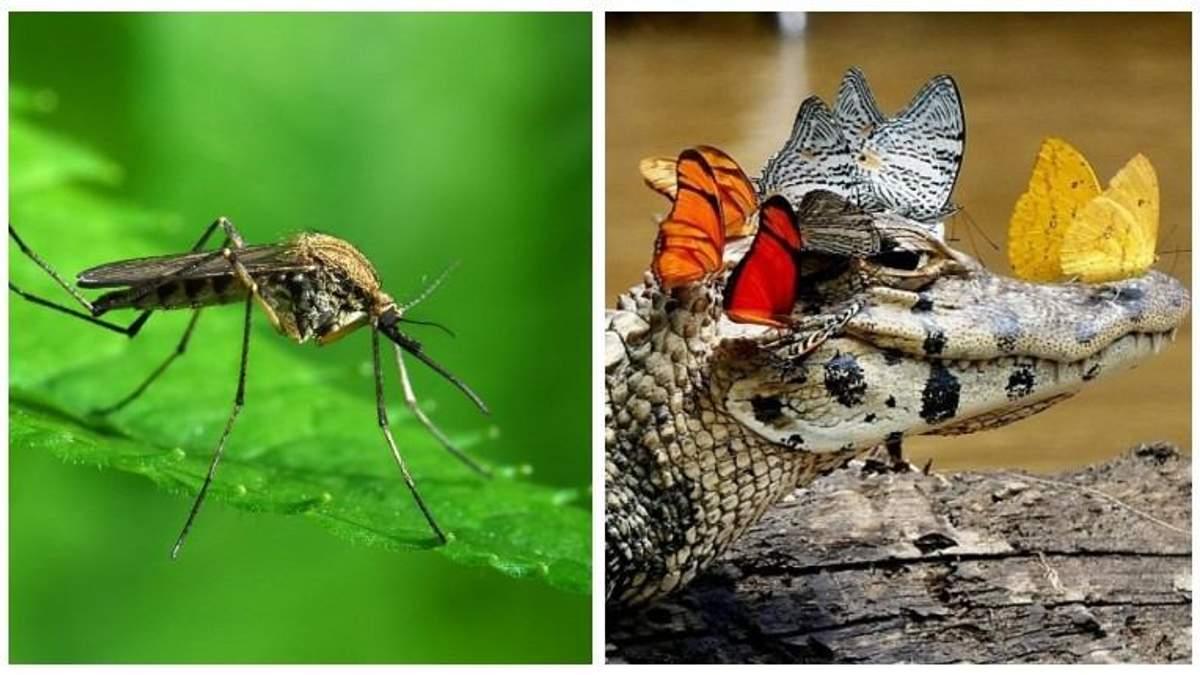 Почему комары опаснее крокодилов