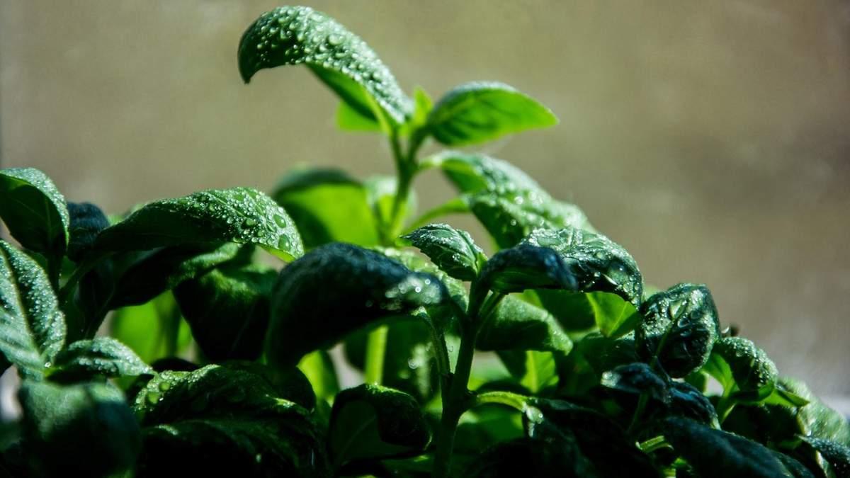 Ученые назвали растение, способное продлить человеку жизнь