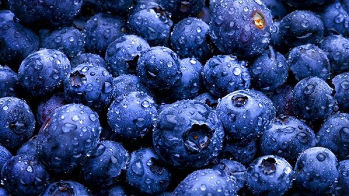 Які ягоди зберігають здоров'я легенів