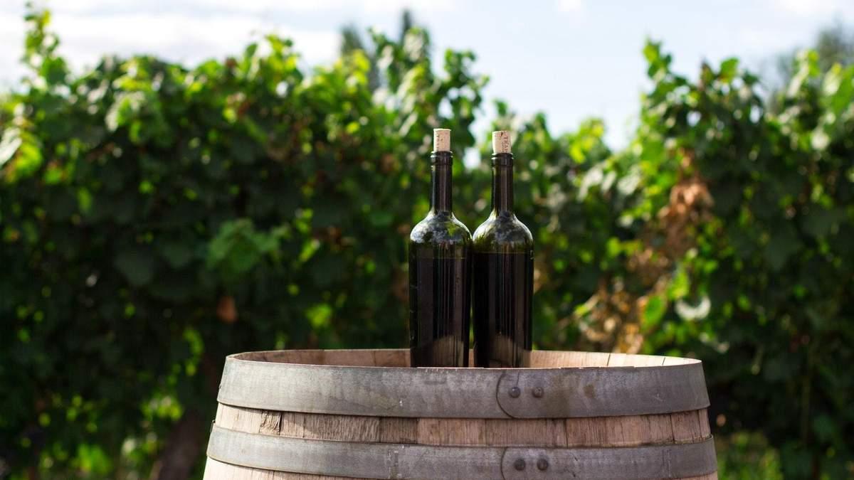 Користь вина: все про корисні властивості - чим корисне вино