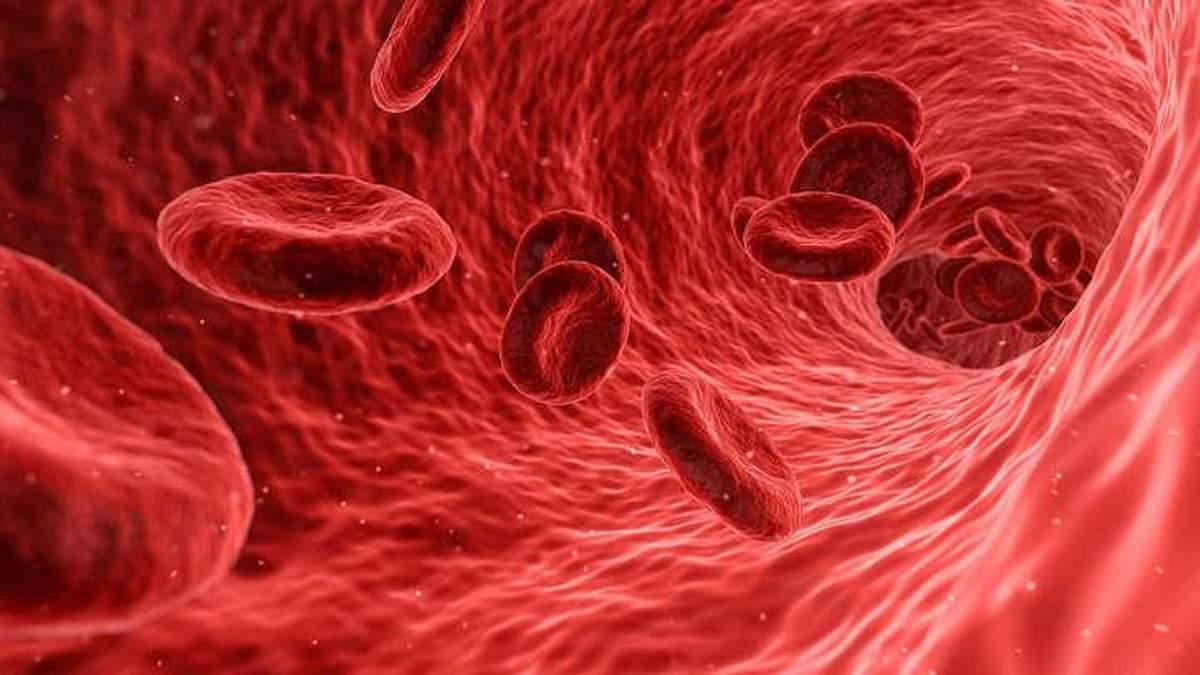 Как повысить уровень гемоглобина в крови: топ-7 продуктов