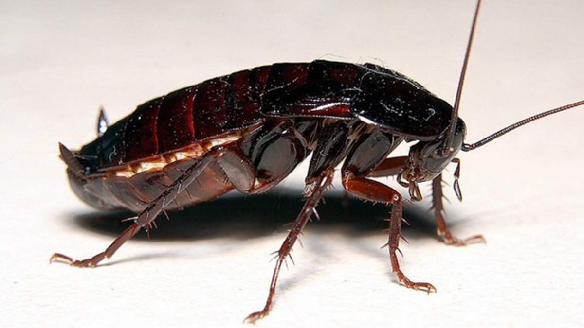 Почему тараканы такие опасные