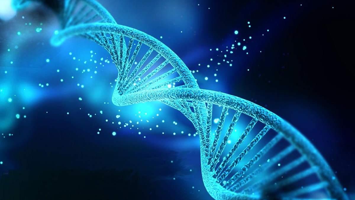 П'ята частина генів людині не потрібна