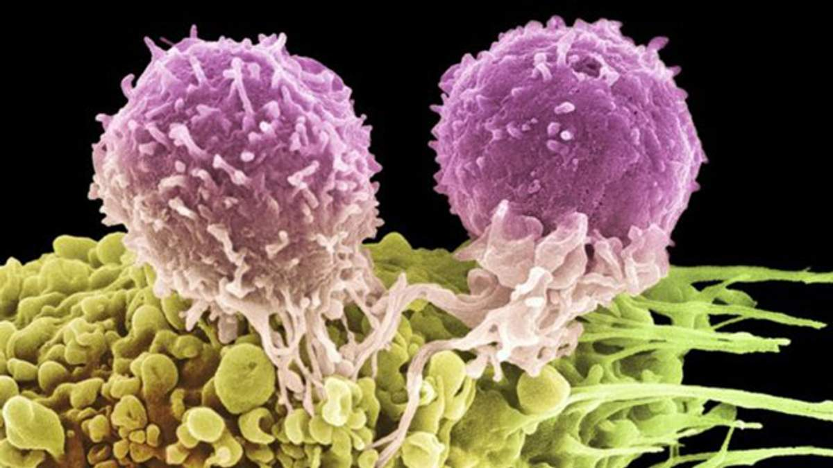 Що таке імунотерапія раку: про відкриття лауреатів Нобелівської премії