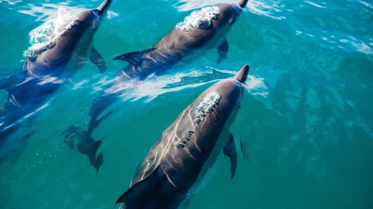 Дельфінотерапія не лікує, – Супрун розвінчала ще один міф