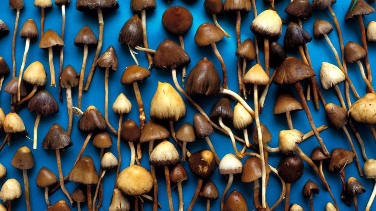 Депресію лікуватимуть галюциногенними грибами
