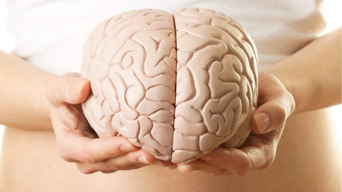 Зависимость размера мозга и интеллекта