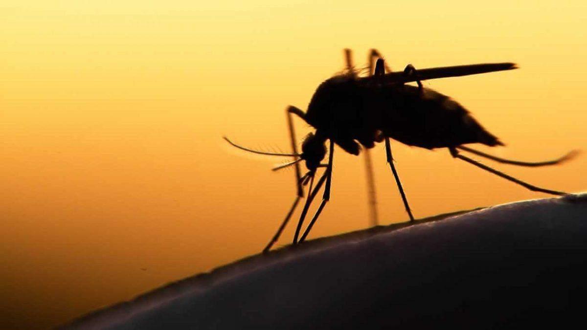 В Украине зафиксировали второй случай малярии за неделю
