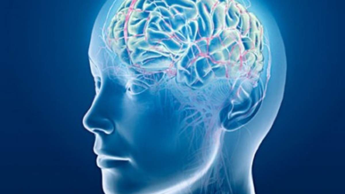 Ученые нашли новый важный участок мозга
