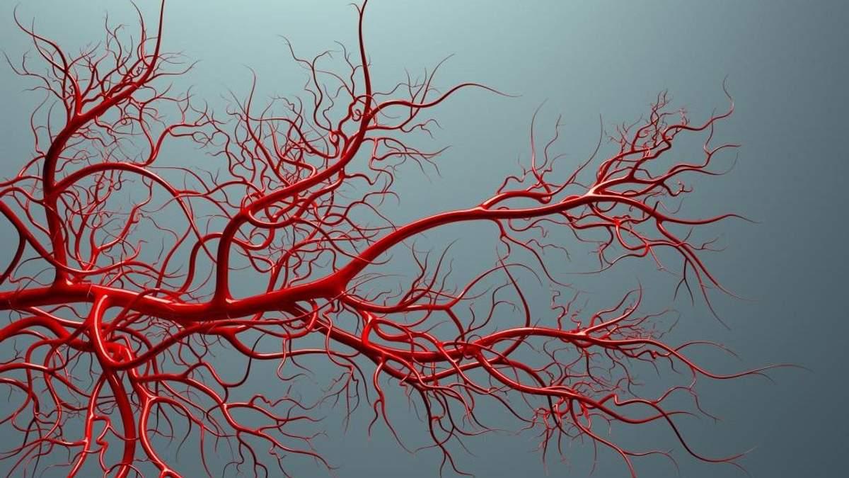 Ученые впервые вырастили кровеносные сосуды человека