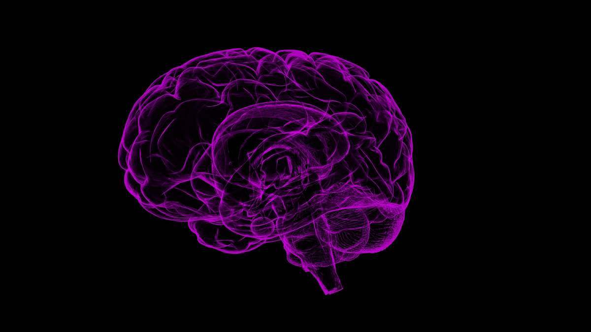 Мозок не втрачає здатність відновлюватися протягом всього життя