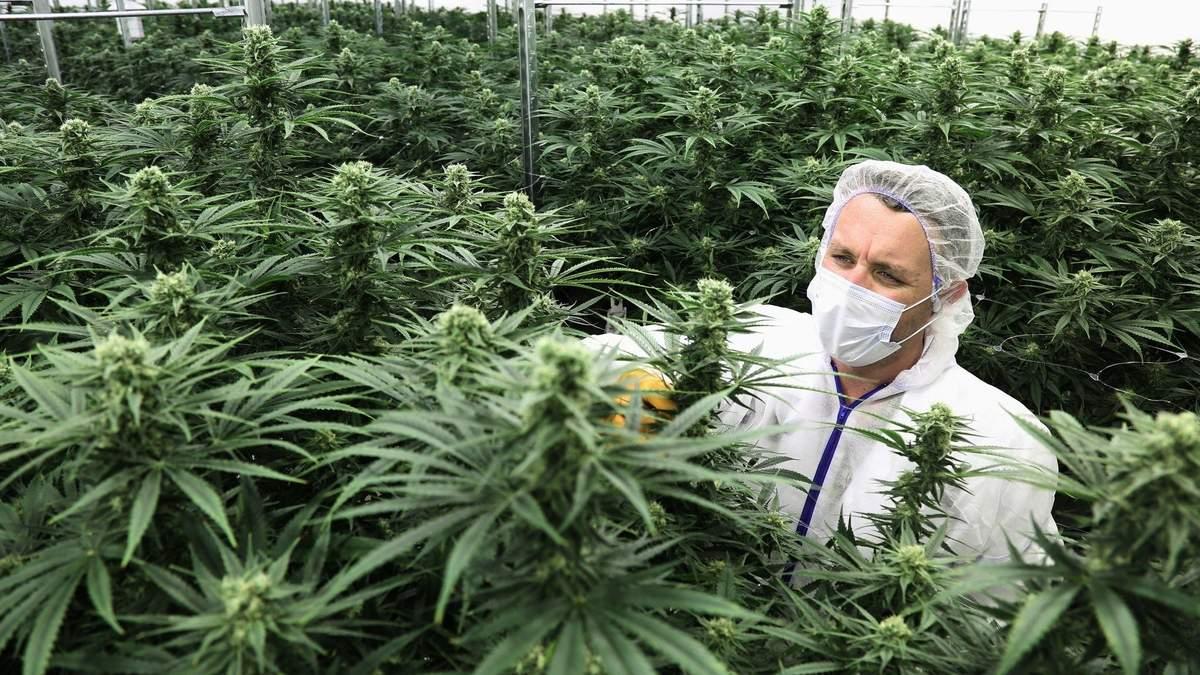 Шанс на полноценную жизнь: когда в Украине разрешат использование медицинской марихуаны