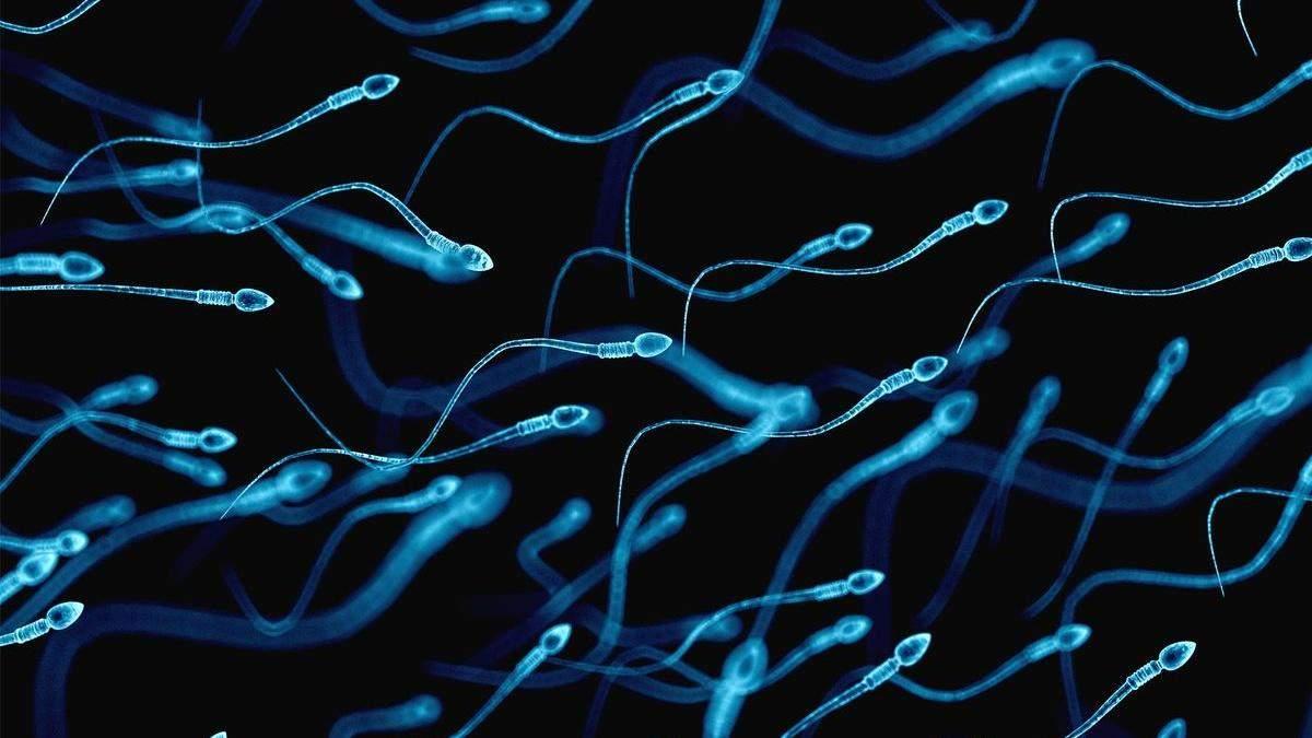 """Обнаружили преимущество """"старых"""" сперматозоидов над """"молодыми"""""""