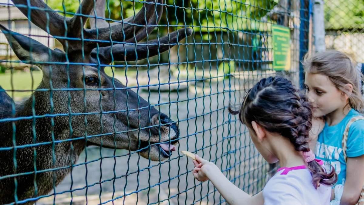 Чому ходити до зоопарку – небезпечно
