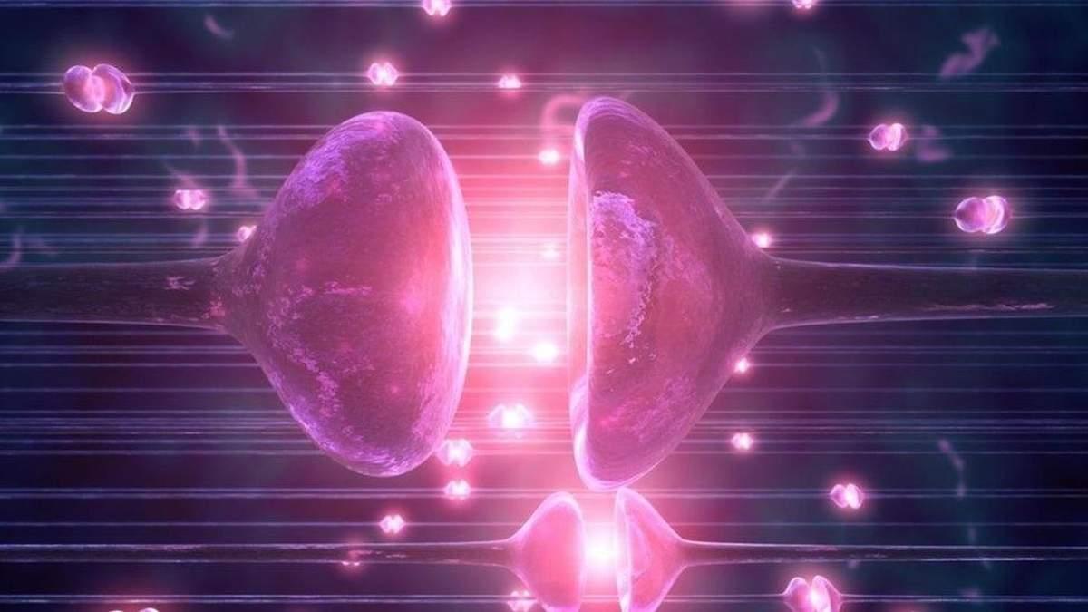 Вчені вперше оживили мозок мертвої тварини (ілюстрація)