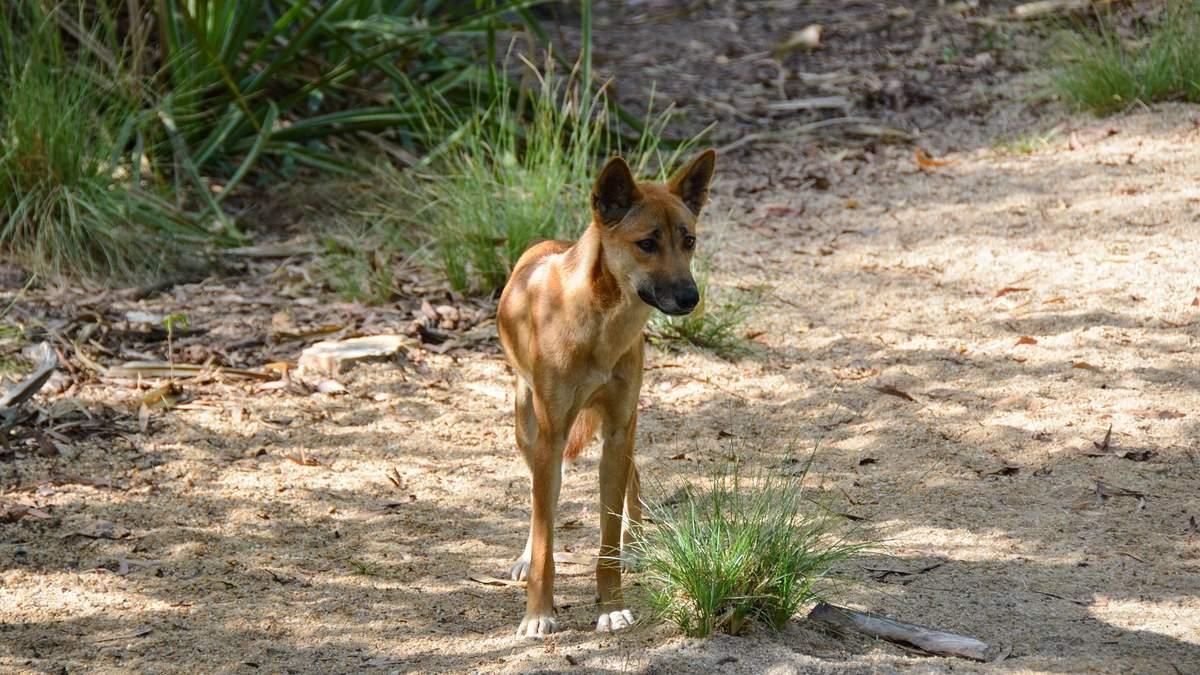 Что делать если укусила собака – куда обращаться за помощью
