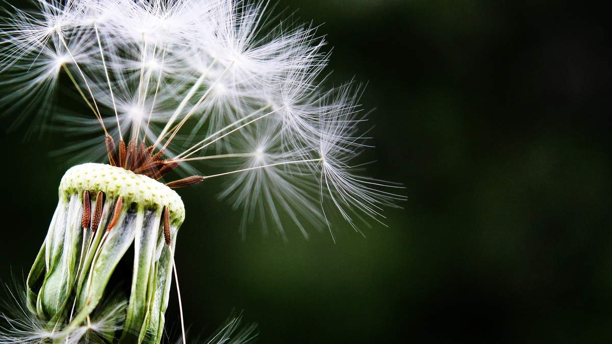 Як вибрати ліки від алергії – види ліків