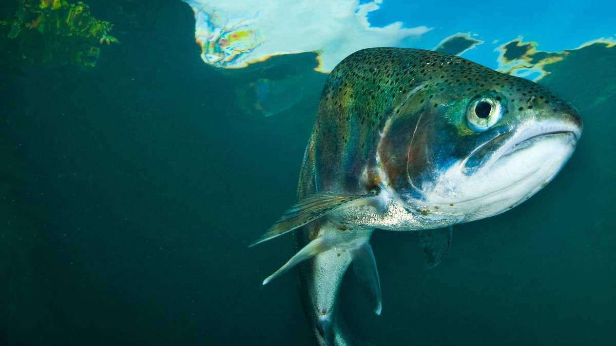 Искусственная рыба