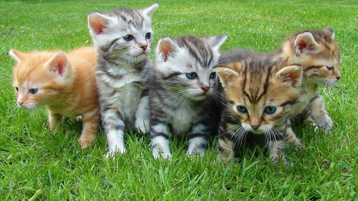 Стригучий лишай: чому виникає, як виглядає лишай від кота