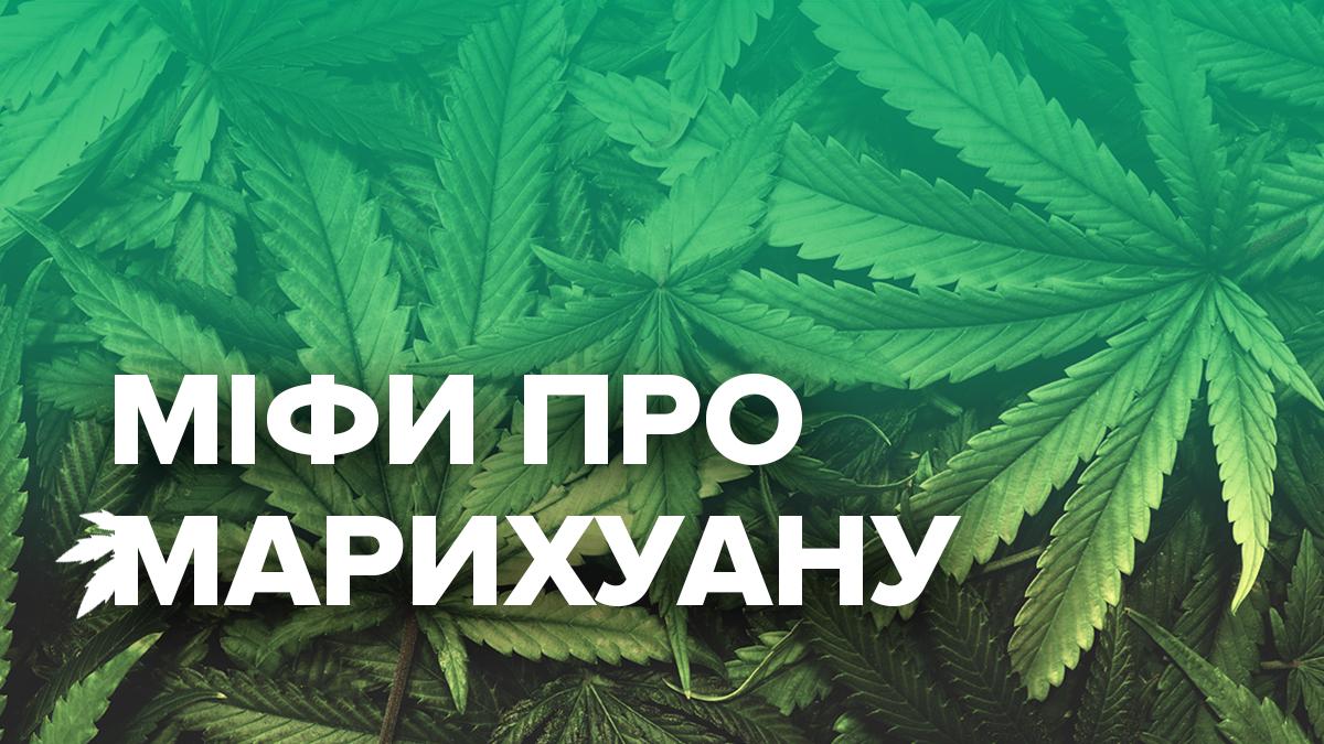 Міфи про канабіс - вплив марихуани на організм і психіку