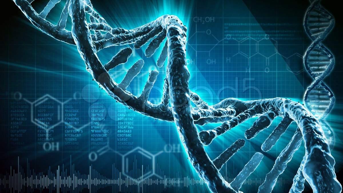Что передается генами