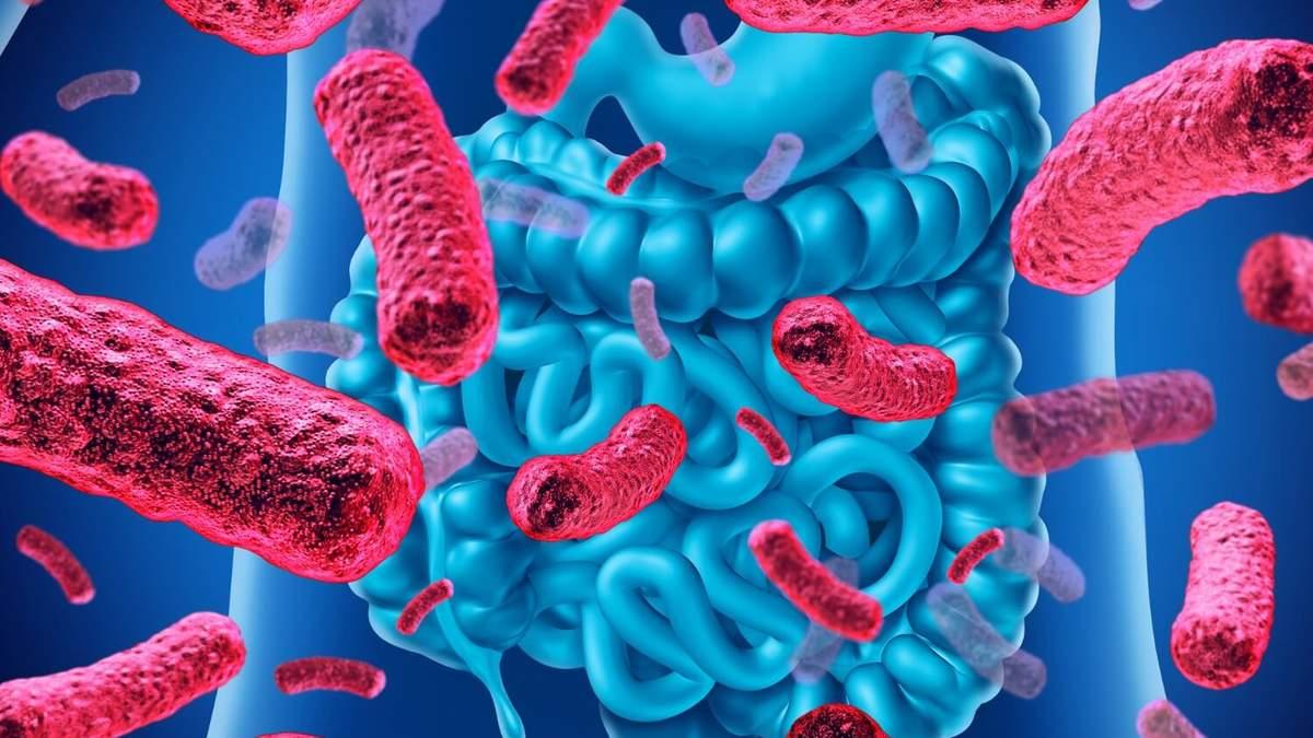 Яку роль відіграють бактерії в нашому організмі