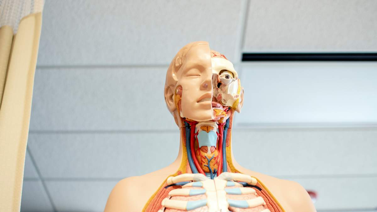 Без яких органів людина може повноцінно жити