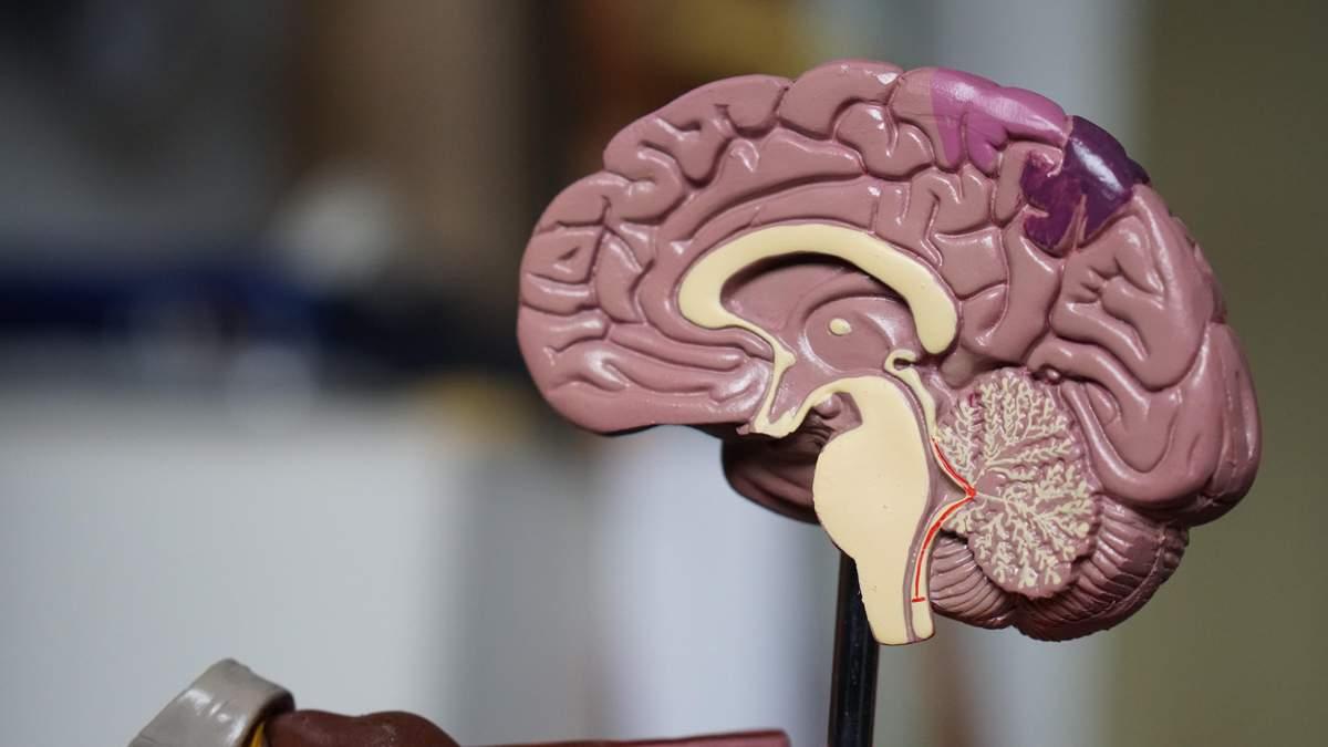 В мозге нашли рецепторы плохого настроения