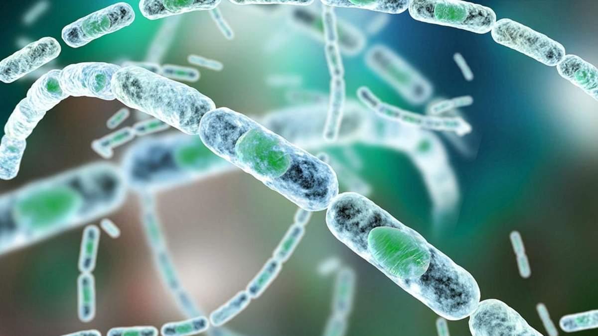 Сибірка: як небезпечну хворобу перетворили в біологічну зброю