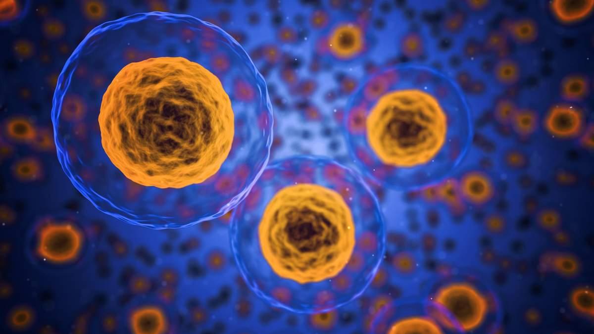 Воспалительные процессы в организме человека