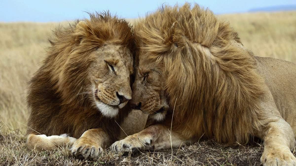 Гомосексуальність в природі