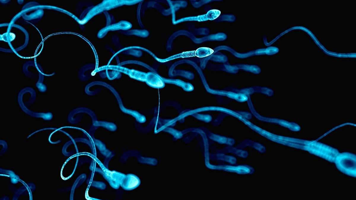 Сперматозоїди можуть конкурувати